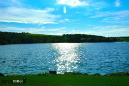 Vivid Pond