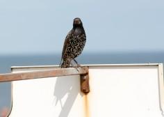 Bird Sunderland Air Show