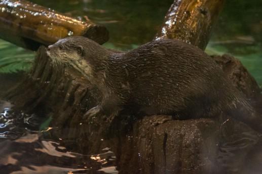Blue Reef Aquarium Otter