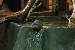 Blue Reef Aquarium Otter