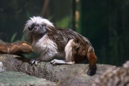 Blue Reef Aquarium Monkey