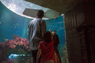 Blue Reef Aquarium
