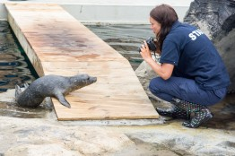 Blue Reef Aquarium Seal