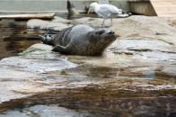 Blue Reef Aquarium Seal