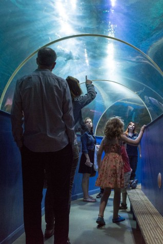Blue Reef Aquarium Tunnel